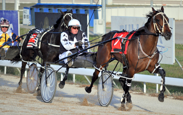 Go Harness Racing Tasmania