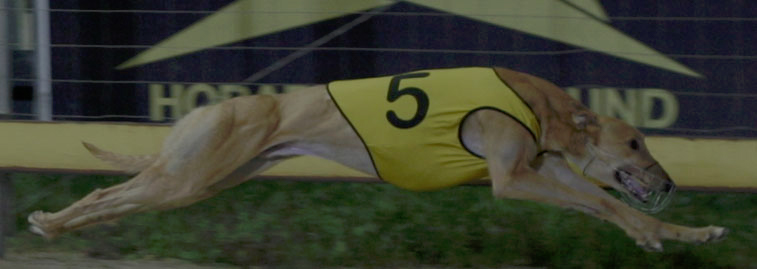 Hobart Greyhound Racing Club