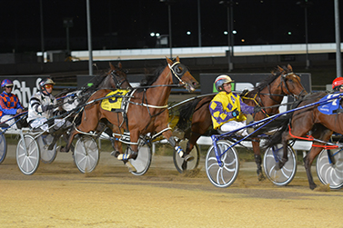Friday Night Burnie Harness Racing