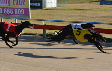 The Luxbet Maiden Thousand Hobart Greyhound Racing