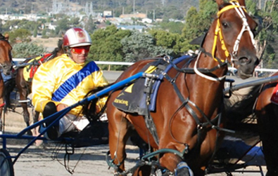 Friday Night New Norfolk Harness Racing
