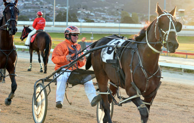 Tasmanian Oaks Day Hobart Harness Racing