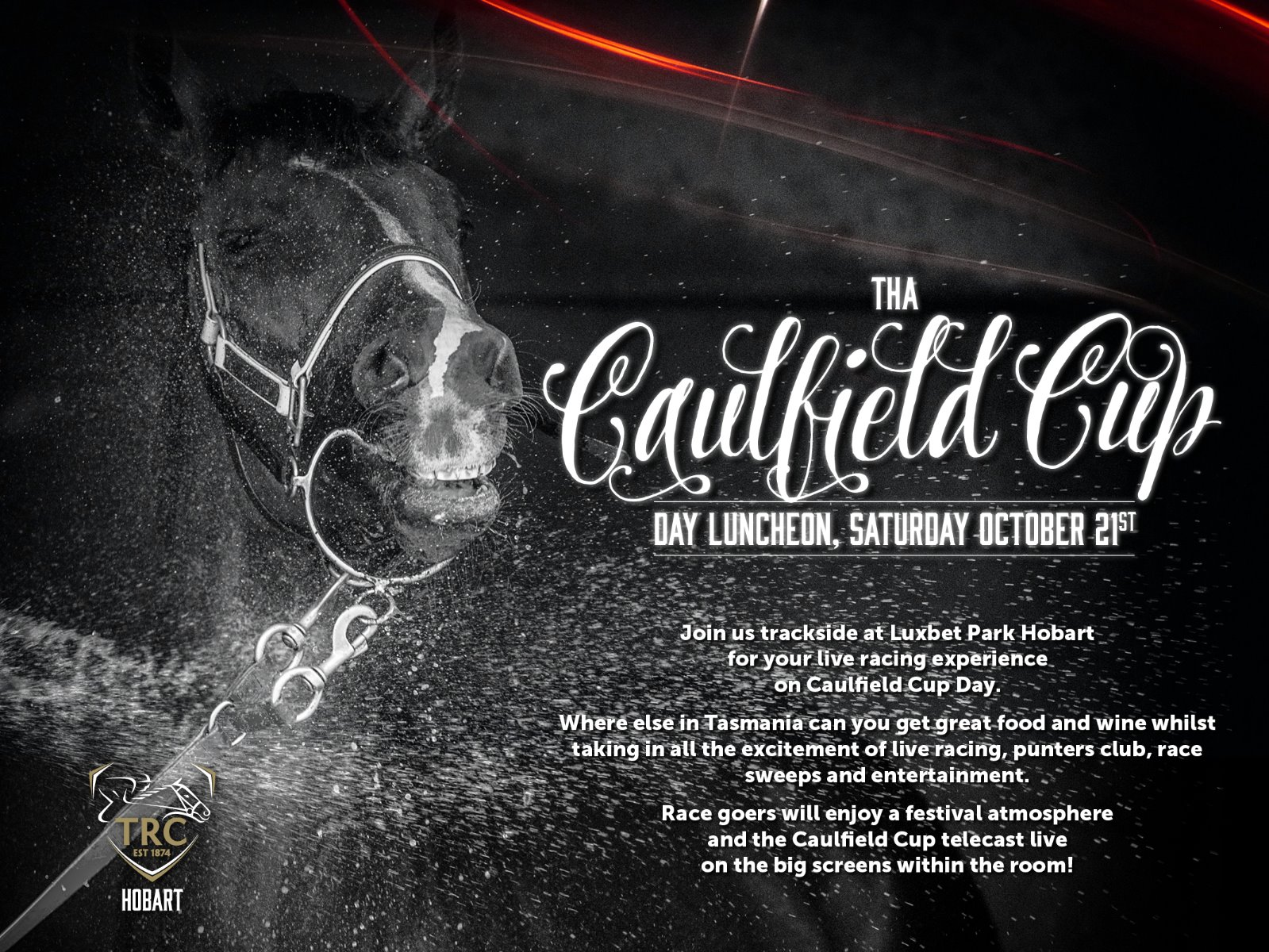 Caulfield Cup Race Day - Hobart Thoroughbred Racing